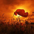 DONT YOU JUST LOVE POPPIES by leonie7