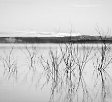 Still Copeton by Daniel Rankmore