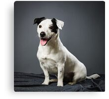 Jack Russell terrier female Canvas Print
