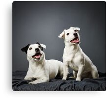 Jack Russell terrier puppy and female Canvas Print