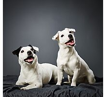 Jack Russell terrier puppy and female Photographic Print