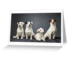 Jack Russell terrier family portrait Greeting Card