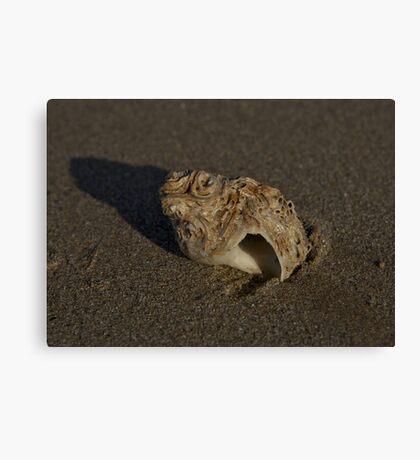 Weathered Whelk on Fahan Beach Canvas Print