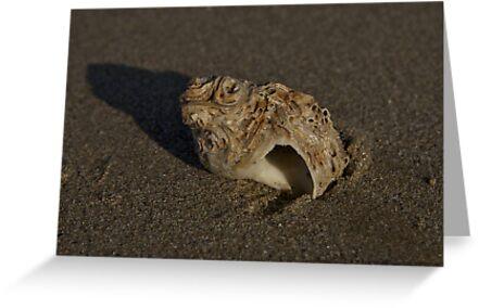 Weathered Whelk on Fahan Beach by George Row