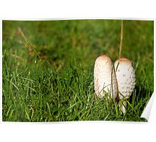 Ink cap fungi Poster