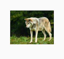 European Timber wolf Unisex T-Shirt