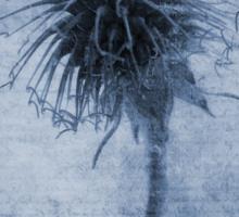 Geum urbanum Cyanotype Sticker