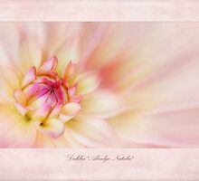 Dahlia Abridge Natalie by John Edwards