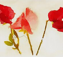 Sweet Pea Watercolour by John Edwards