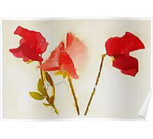 Sweet Pea Watercolour Poster