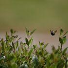 Bee Happy by DAngelo982