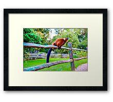 monkey pee break Framed Print