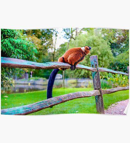 monkey pee break Poster