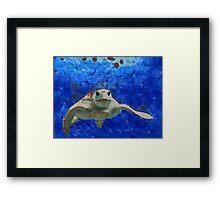 Thursday Island Turtle Framed Print