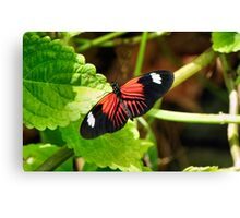 The Year Of The Butterfly! Canvas Print