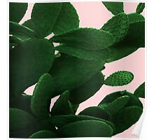 Cactus On Pink  Poster