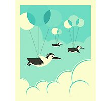FLOCK OF PENGUINS Photographic Print