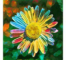 Rainbow Daisy Flower Photographic Print