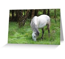 The grey mare Greeting Card