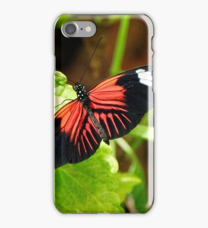 The Year Of The Butterfly! iPhone Case/Skin