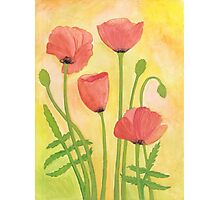 Red Poppies ~ Watercolor Painting Photographic Print