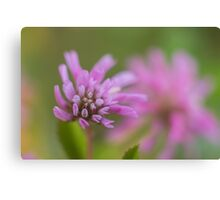 Macro Lilac purple flowers  Canvas Print
