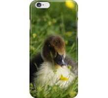 Ducklings in the garden iPhone Case/Skin