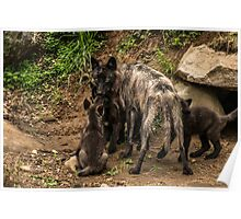Black Wolf With Pups Poster