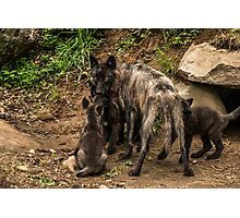 Black Wolf With Pups Photographic Print