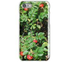 Rosa rugosa hips, Martha's Vineyard iPhone Case/Skin