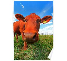 NOSY COW Poster