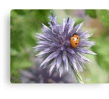 Ladybird Magnet Canvas Print
