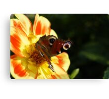 Peacock Butterfly on a Flower Canvas Print
