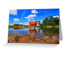 WATER COW Greeting Card