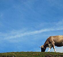 Cow on Nockalm - Austria by Arie Koene