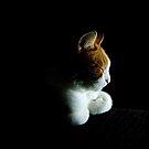 Fudge the Cat by Els Steutel