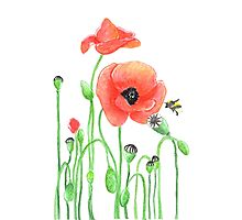 Red poppies and a bumblebee Photographic Print