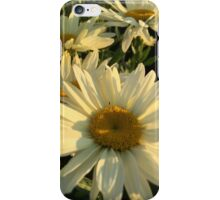 Daisies at Sunset iPhone Case/Skin