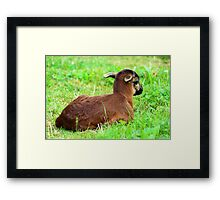 Waiting for Mummy Framed Print