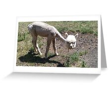 Cute, Hilarious Baby Alpaca Greeting Card
