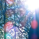 Sun Through a Tree by Andrew Brewer
