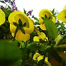 Yellow Flowers by Andrew Brewer