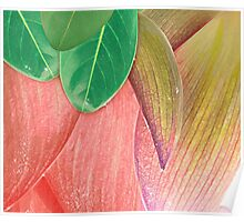 Lotus Lily Flower Poster