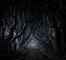 Kingsroad, The Dark Hedges by Wrayzo