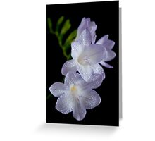 Freesia Greeting Card