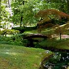 Japanese Garden - Maymont Park by ctheworld
