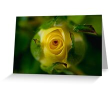 Yellow rose bud Greeting Card