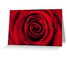 Deep red rose Greeting Card