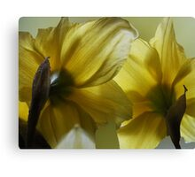 Daffy Duo Canvas Print