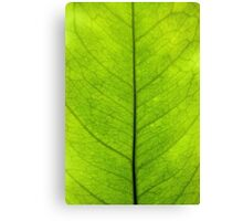 Lemon leaf Canvas Print